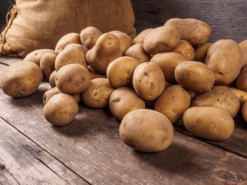Tolle Knolle, alles rund um die Kartoffel